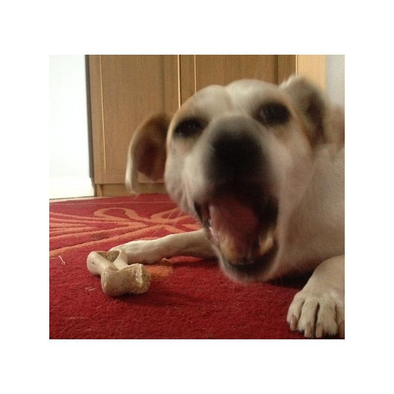 Ami Vegan Dog Food Review