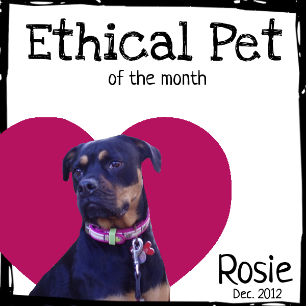 certificate for ethical pet of the month