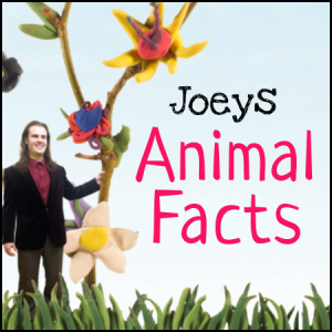 joeys_animal_facts