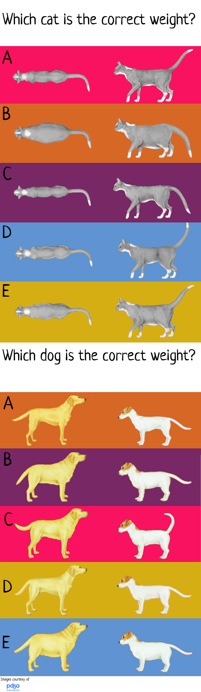 cat and dog weight quiz