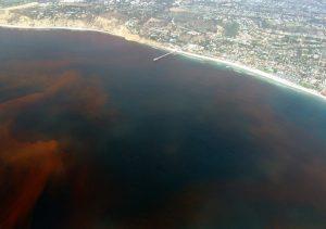 hypoxia gulf of mexico dead zone organic farming
